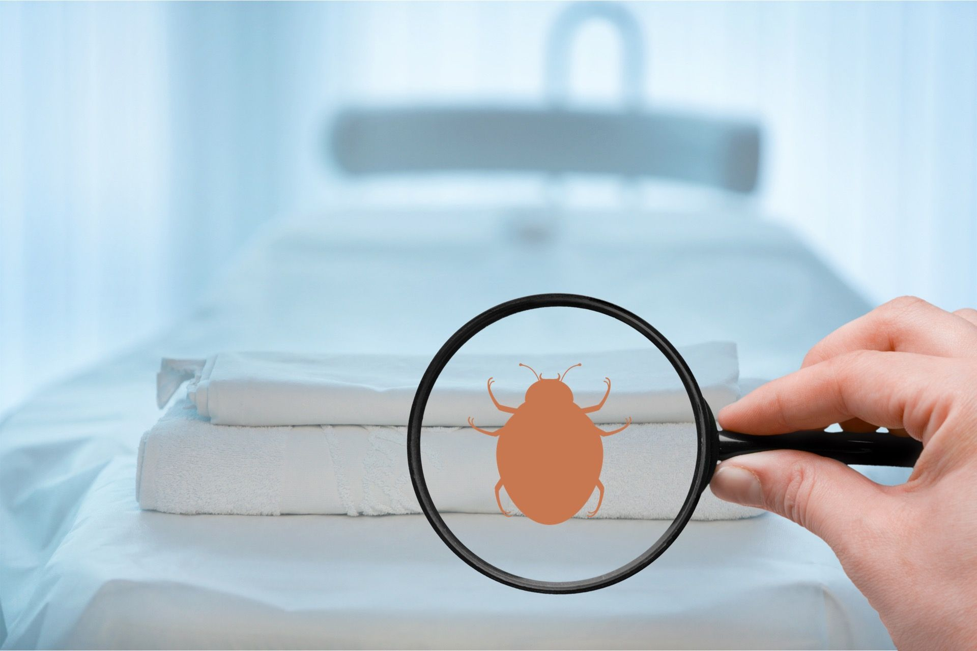 Identify & prevent Common Pests in your home, kitchen, office, or warehouse with Effective Pest Management